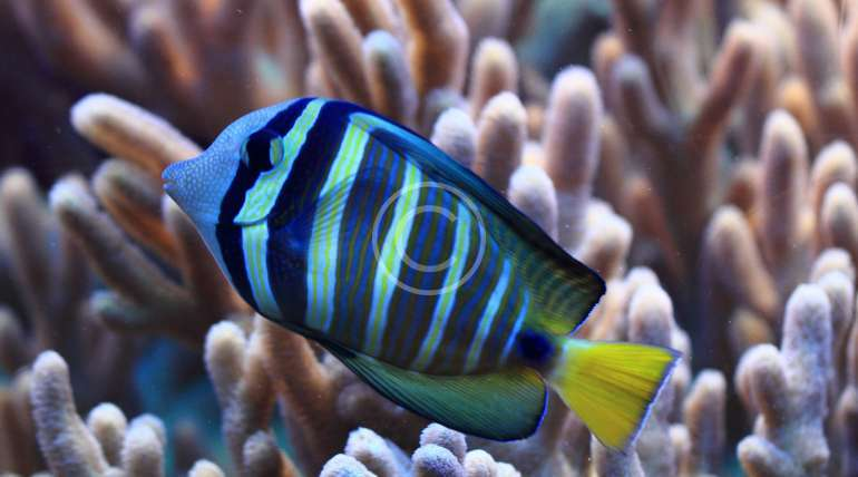 Fishes, corals and more